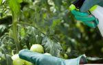Правила использования трихопола для обработки помидоров