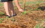 Как нужно правильно мульчировать почву?