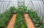 Рациональное земледелие, или что можно посадить в теплице в июле