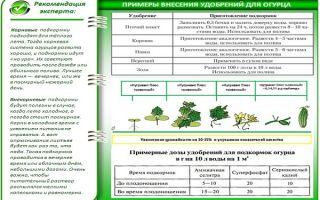 Органическая и минеральная подкормка огурцов