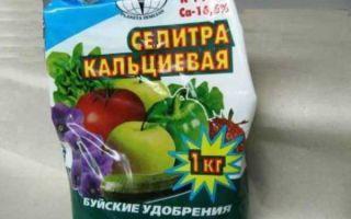 Уход за помидорами: нужно ли пасынковать?