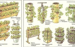 Технология посадки и выращивания клубники