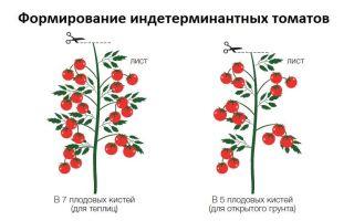 Формируем помидоры: основные правила и видео