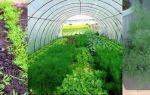 Технология посадки помидоров в феврале