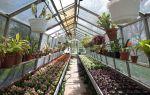 Как создать бизнес по выращиванию цветов в теплице