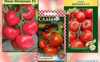Лучшие сорта ранних помидоров для теплиц