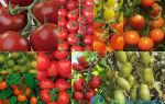 Какие сорта кистевых томатов подойдут для теплиц?