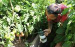 Эффективные способы борьбы с фитофторой в теплице