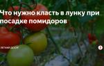Что следует класть в лунку при посадке помидоров