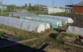 Строительство парников для помидоров: рассада в защищенном грунте