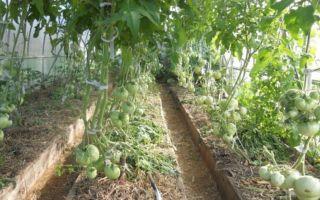 Как осуществляется правильное мульчирование томатов в теплице?