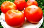 Томаты белый налив: характеристика и выращивание сорта
