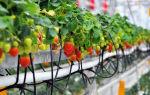 Способы выращивания клубники на гидропонике