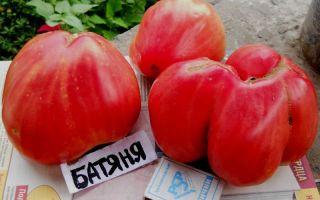 Характеристика томата сорта батяня: описание и отзывы