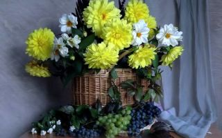 Как продлить жизнь желтых георгинов в вазе?