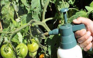 Чем, когда и как нужно опрыскивать тепличные помидоры