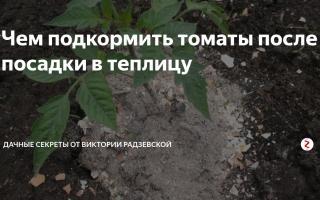Чем подкормить подросшие помидоры после посадки в теплицу