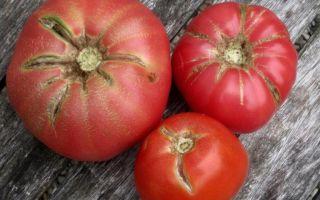 Актуальный вопрос: почему помидоры трескаются?