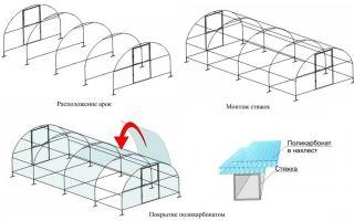Каково устройство теплицы из поликарбоната?