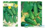 Лучшие семена огурцов для теплиц