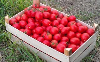 Характеристика и агротехника томата солероссо f1