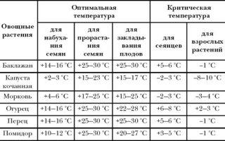Какая температура считается оптимальной для выращивания огурцов в теплице?