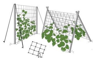 Шпалера для огурцов: характеристика видов и технология шпалерного выращивания
