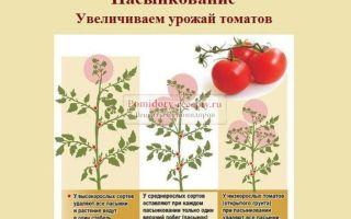 Секреты огородников: как использовать черный хлеб в качестве подкормки для помидоров