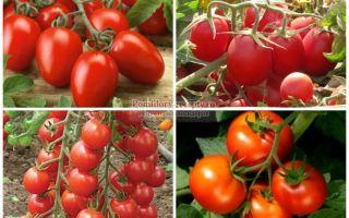 Лучшие сорта помидоров для открытого грунта и теплицы
