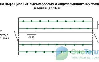 Возможные варианты схем посадки томатов в теплице 3х6