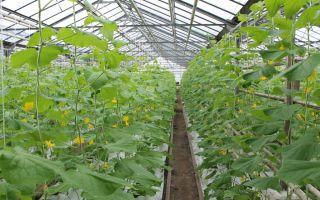 Особенности круглогодичного выращивания овощей