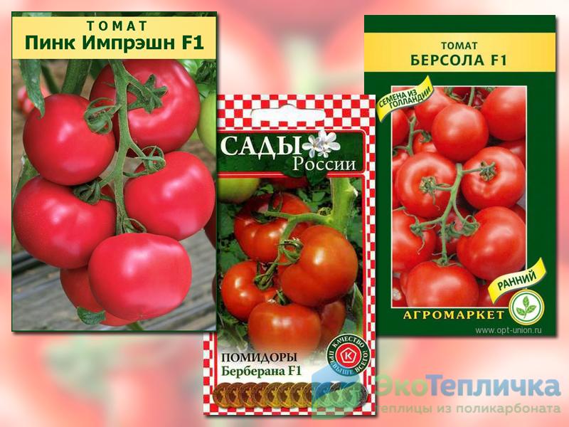 лучшие ранние сорта помидоров для теплиц