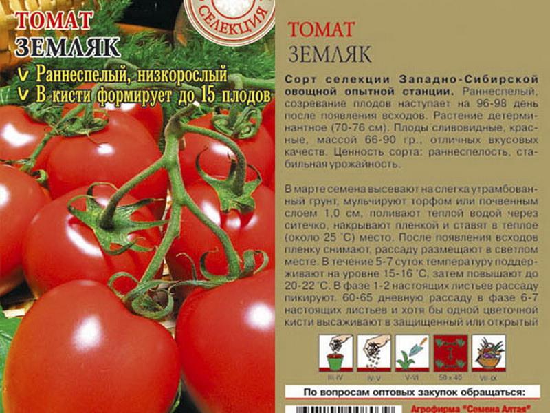 томат земляк отзывы фото