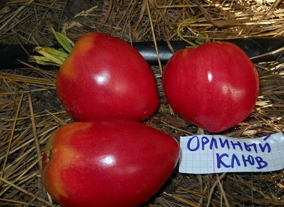 Характеристика томата орлиный клюв: отзывы и фото6