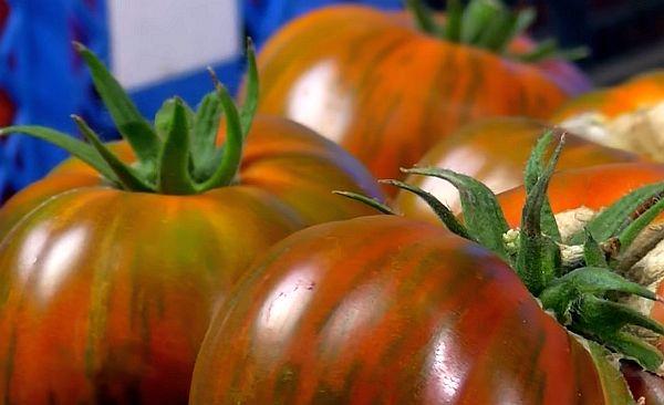 Характеристика томата полосатый шоколад: отзывы и фото2