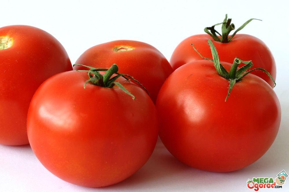 Характеристики голландских сортов помидоров4