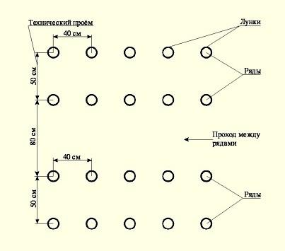 Технология посадки томатов в теплице: расстояние между рядами и саженцами4