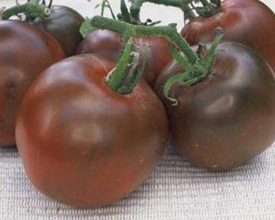 Томаты черный принц: описание сорта и технология выращивания7